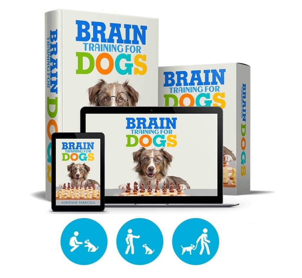 brain training for dogs complete complete dog training guide