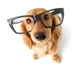 brain training for dogs online dog training course