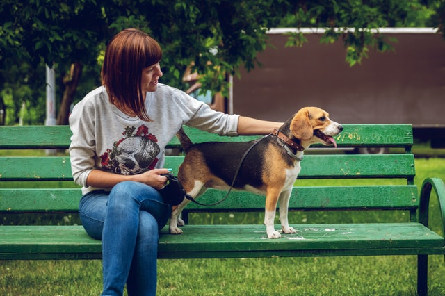 beagle top cutest dogs