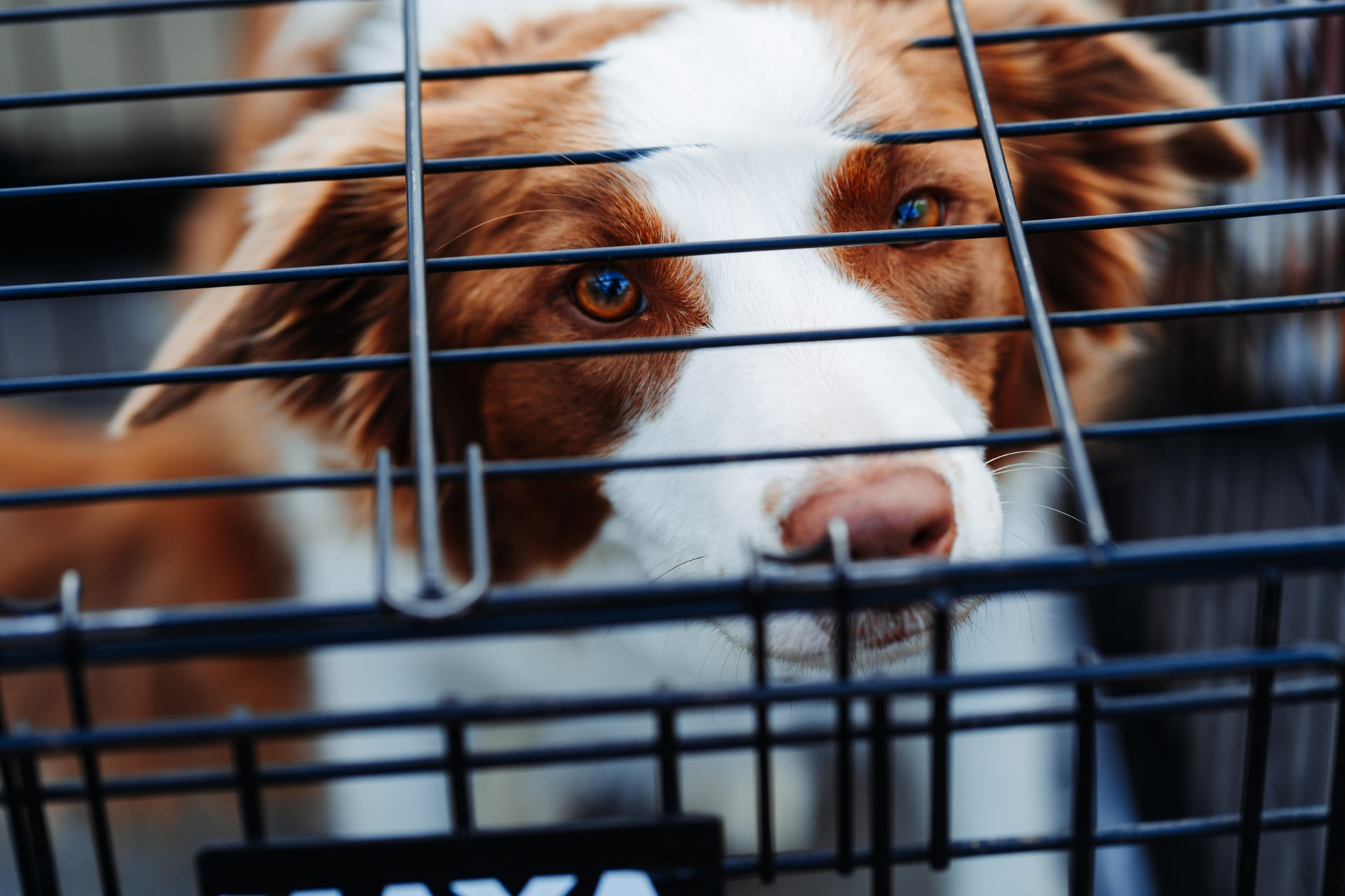 types of dog crate